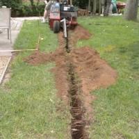 Tree Service Hampton