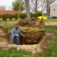 Planting Large root ball